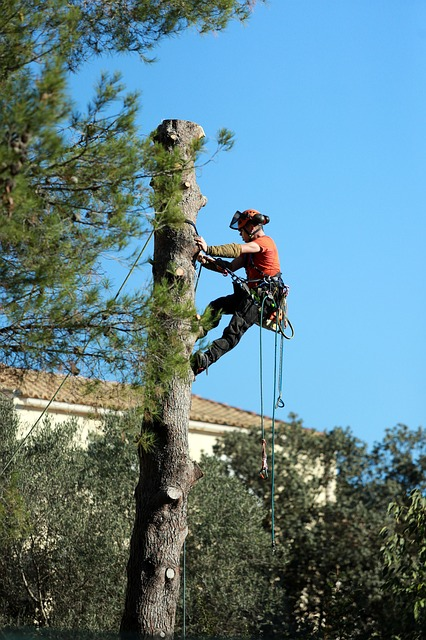 What You Should Know About Tree Removal Services
